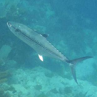 2020 - Virgin Gorda (underwater)