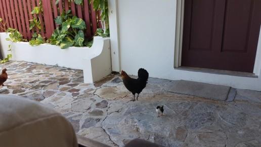 Hello little chick