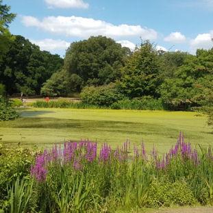 Kew (July)